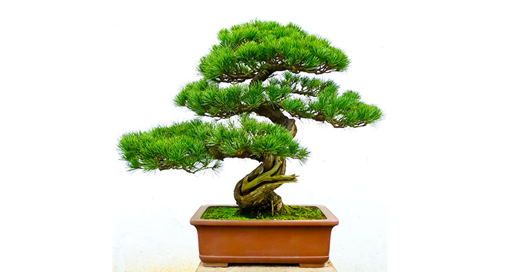 Golf shore by sarian retirement village retirement for 1800 flowers bonsai